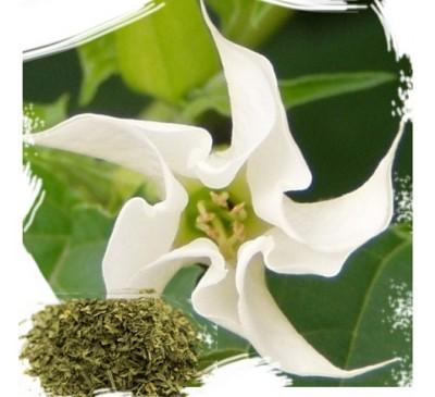 Дурман обыкновенный (листья, 5 г) / Datura stramonium