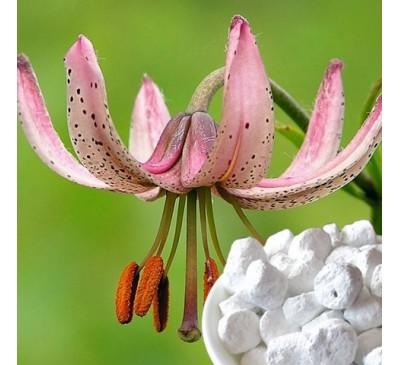 Ладан (смола) + натуральный ароматизатор Лилия (5 г) / Boswellia sacra
