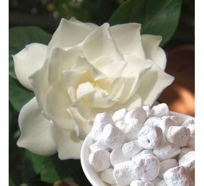 Ладан (смола) + натуральный ароматизатор Гардения (5 г) / Boswellia sacra