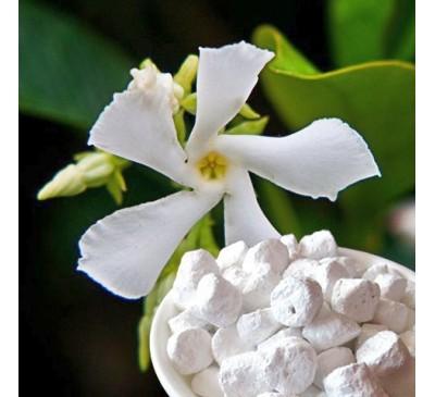 Ладан (смола) + натуральный ароматизатор Жасмин (5 г) / Boswellia sacra