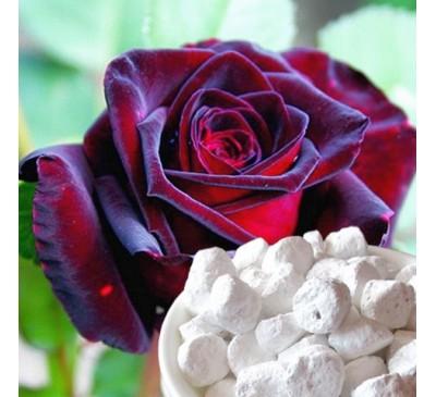 Ладан (смола) + натуральный ароматизатор Роза (5 г) / Boswellia sacra