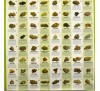 Феменизированная смесь семян автоцветов и фотопериодов (1 шт.) / Auto/Foto Femenised MIX