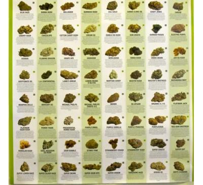 Феменизированная смесь семян автоцветов (1 шт.) / Auto Femenised MIX